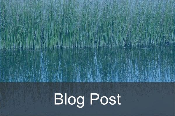 blog post - pond (1)
